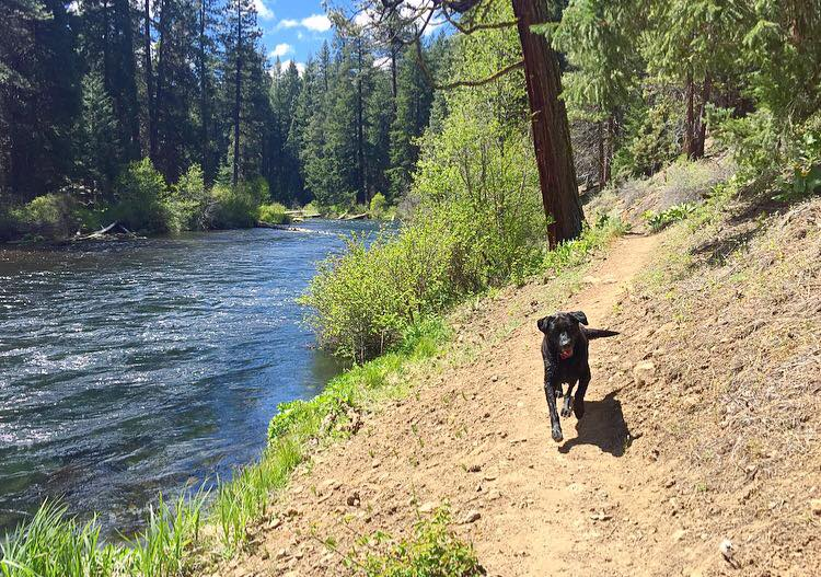 hiking with dog bend oregon