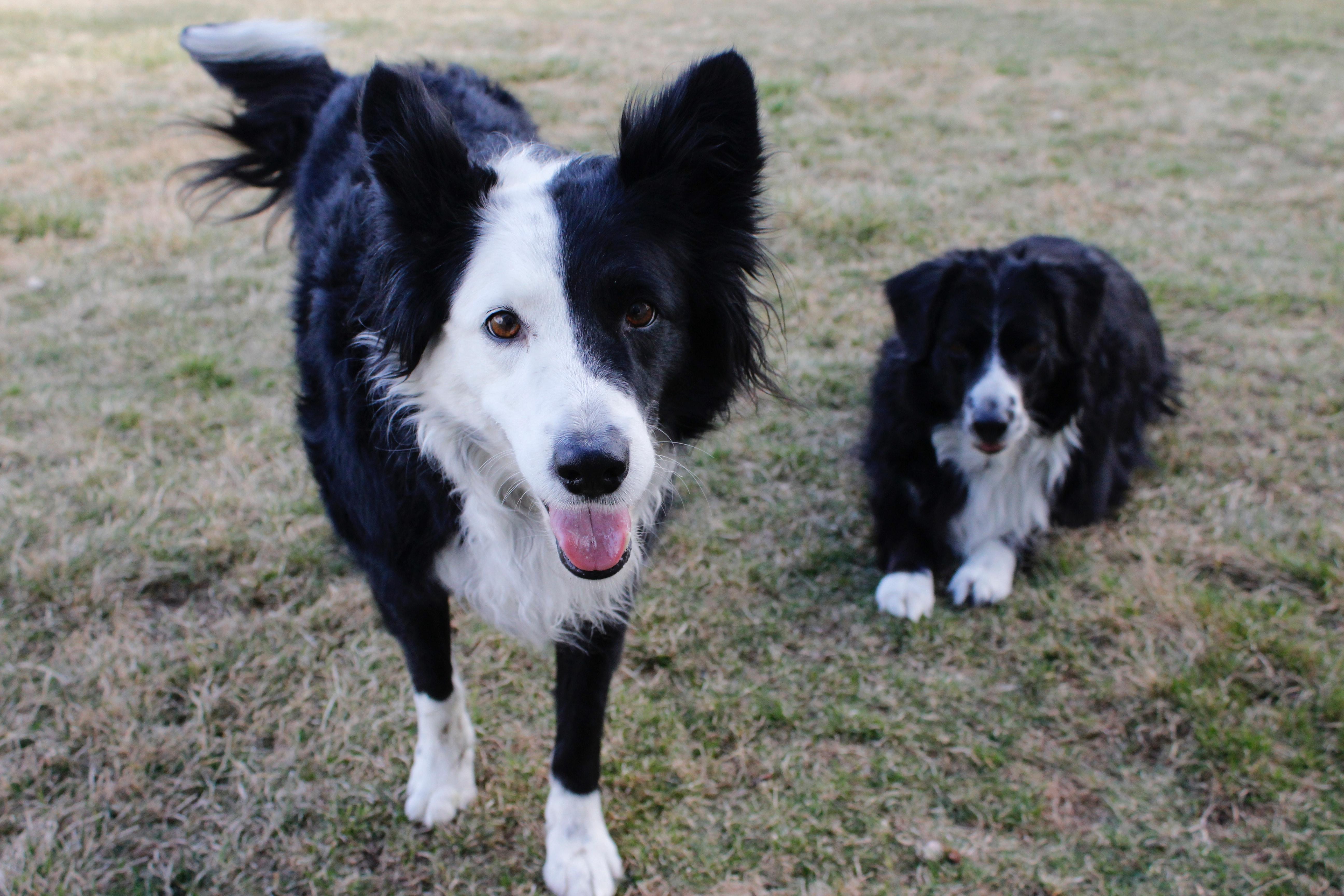 Herd U Needed A Home Canine Rescue @ Eastside Bend Pet
